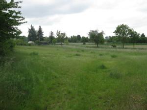 Wiesengrundstück nahe des Med-Centers, welches für Geländetausche mit Gartenbesitzern vorgehalten wird. Bis dahin könnte man hier aber ohne Probleme mit etwas Schotter übergangsweise Parkplätze einrichten.